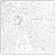 Silver Giant Spiderweb: click to enlarge